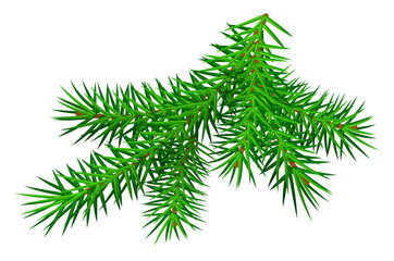 Green branch pine tree isolated on white
