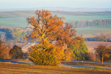 Scenic road through the autumn agricultural fields, colorful rural landscape, nature painting, South Moravia, Czech Republic