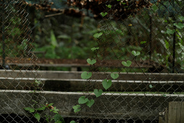 A broken fence is seen in a greenhouse at the botanical garden in Caracas