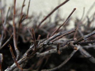 Wooden Branches - Macro