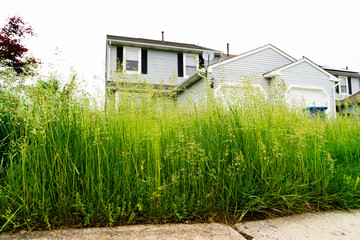Very Tall Grass of Vacant Abandoned Town Home Wall mural