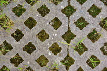 Latticed concrete paving slab. Element for the improvement of parks and back yards. The grass grows through the pavement