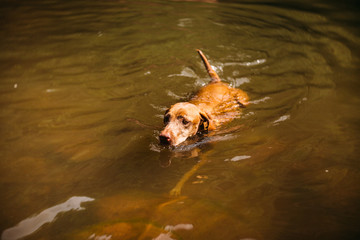 Dog Swimming in Watering Hole