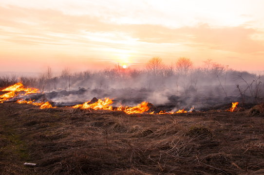 On a hot summer day, dry grass is burning on the field. Burning field with dry grass.