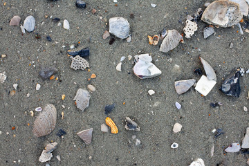 Shells and rocks on shore or beach