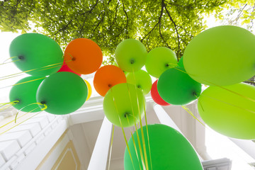 Group of multicolored helium filled balloons.