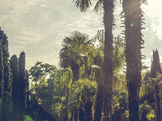 palm trees against the sky with sun, exotic tropical concept