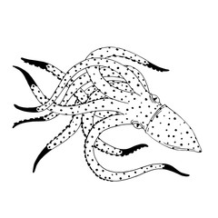 Squid hand drawn sketch illustration. Ink outline drawing with marine animal, sea life illustration