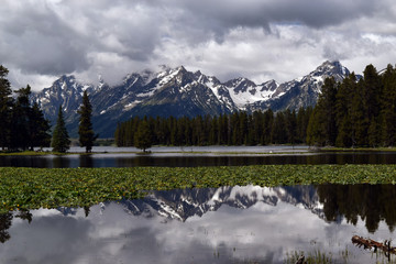 Poster Reflection The Tetons reflected in the calm waters of Heron Pond, near Colter Bay in Gran Teton National Park