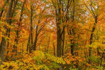 Beautiful autumn season at Hakkoda mountain area, Aomori, Japan.