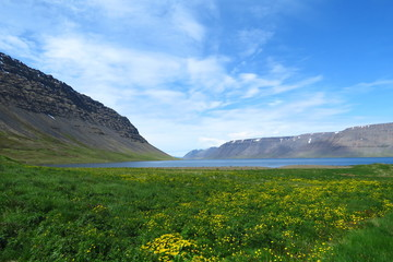 Beautiful summer landscape with a blue sky, yellow flowers and a lake in Iceland
