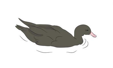 duck drake. vector