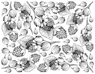 Hand Drawn of Golden Himalayan Raspberries on White Background