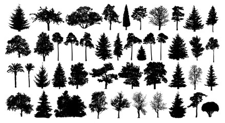 Coniferous forest. Trees set silhouette. Isolated tree on white background Fotoväggar