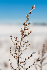 Branch of a plant covered with cold icicles of white frost in the winter field landscape. Ice covered grass on a snow covered field plants in frost nature background.