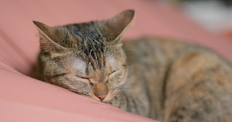 Cute cat lying on bed and sleeping