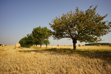 Fototapete - Paysage Campagne 305