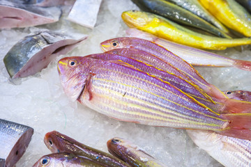 whole fresh fishes are offered in the fish marke