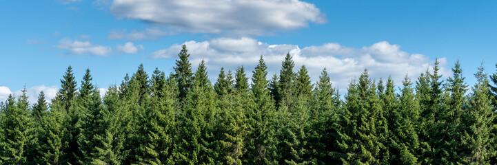Fototapeten Wald Wald und blauer Himmel Panorama
