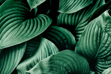 Green leaves nature plants. Abstract background