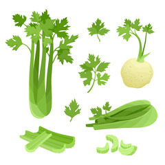 Bright vector collection of colorful celery isolated on white
