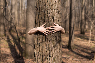 Female hands and tree trunk