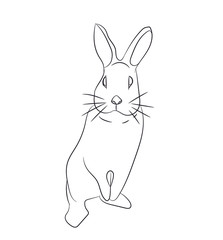rabbits with lines, vector