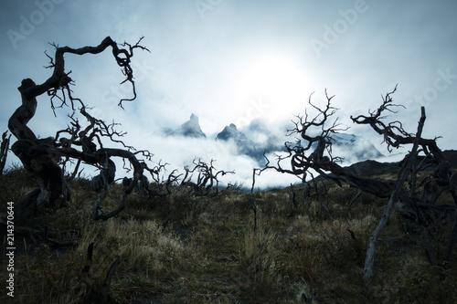 Phantasmagoric vision of Torres Del Paine  Twisted trees in