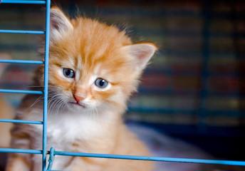 Kitten with sad eyes