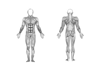 muscles. structure diagram