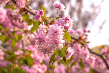 Tenderness of the Spring Blossom