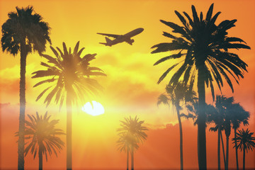 flying plane above palms at sunset