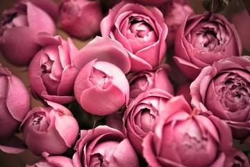 Rose bush Peony