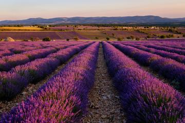 Papiers peints Grenat Champ de lavande, coucher de soleil. Ferrassières, Provence, France.