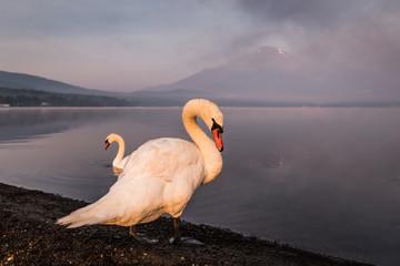 Poster Reflexion Mountain Fuji with reflection at Lake Yamanakako in morning