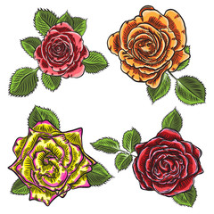 Roses flowers, red pink, yellow and orange open head buds and green leaves. Isolated on white background. Set collection. Vector.