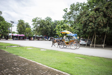 Horse carriage ride for tourist at the temple in Northern Thailand, local transportation, tourism concept, outdoor day light
