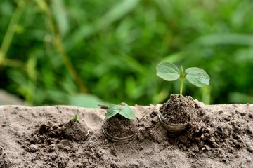 Acrylic Prints Roe baby plants growing out of coins in soil, nature plants coins growing soil, Business/Finance concepts.