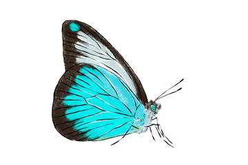 Beautiful blue butterfly isolated on white background. Realistic hand drawing illustration. Insect collection.