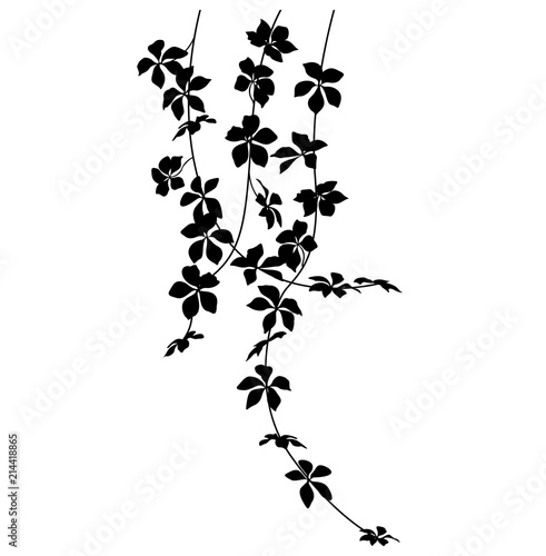 hanging plant silhouette stock image and royalty free vector files