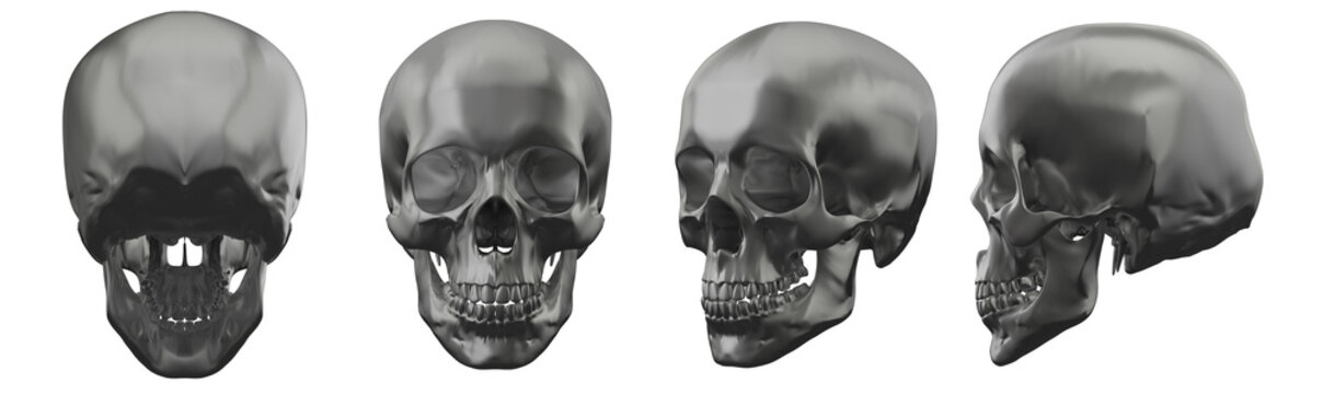 3d rendering illustration of skull
