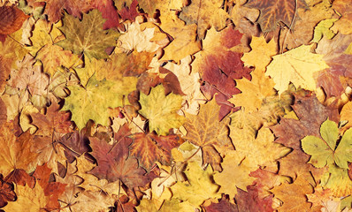 Seasonal autumn background of colorful leaves.
