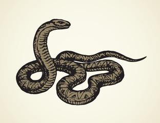 Snake. Vector drawing