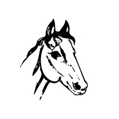 Hand drawn sketch of horse head. Black line drawing isolated on white background. Mustang portrait. Vector animal illustration.