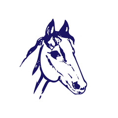 Hand drawn sketch of horse head. Bllue ink line drawing isolated on white background. Mustang portrait. Vector animal illustration.
