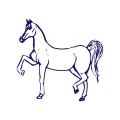 Hand drawn sketch of horse. Blue ink line drawing isolated on white background. Vector animal illustration.