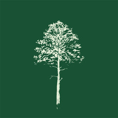 Pine tree. Line drawing Isolated on green Background. Hand drawn sketch. Vector illustration.