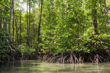 Mangrovenwald in Sabang