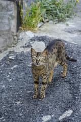 Look cross-eyed Cat