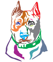 Colorful decorative portrait of Dog American Staffordshire Terrier vector illustration